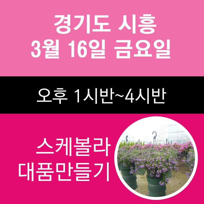 시흥클래스-3월16일 금요일 스케볼라 대품만들기